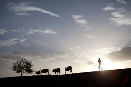 Children look on as cows head home for the evening in Nasir, South Sudan. April 2012. © Brendan Bannon/MSF
