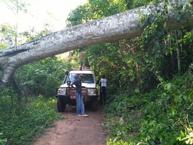 A tree blocks the path for the MSF team in Central African Republic