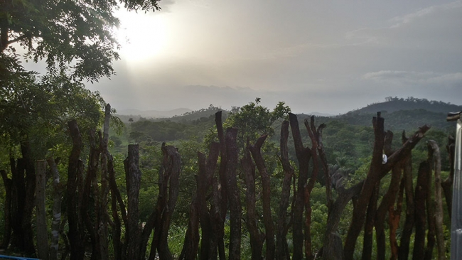 The dense forest of Sierra Leone