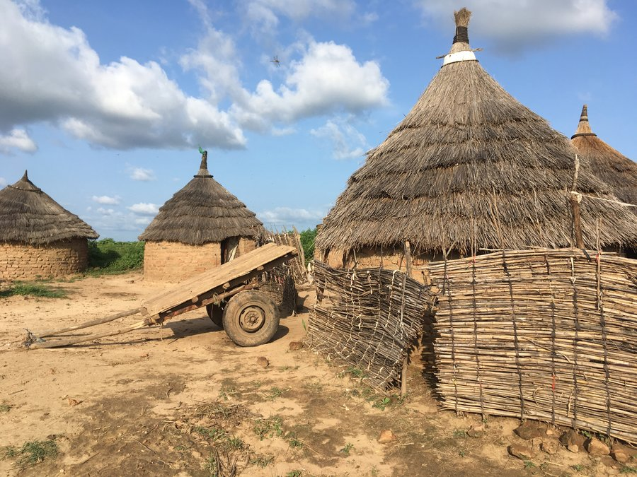 Three buildings have grass roofs, and are built with mud bricks. There is a fence built with reeds.