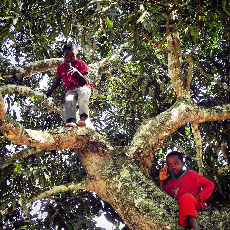 Two young boys climb a mango tree in DRC
