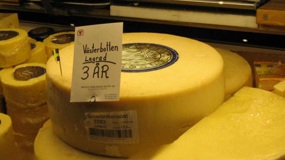 A wheel of vasterbotten cheese