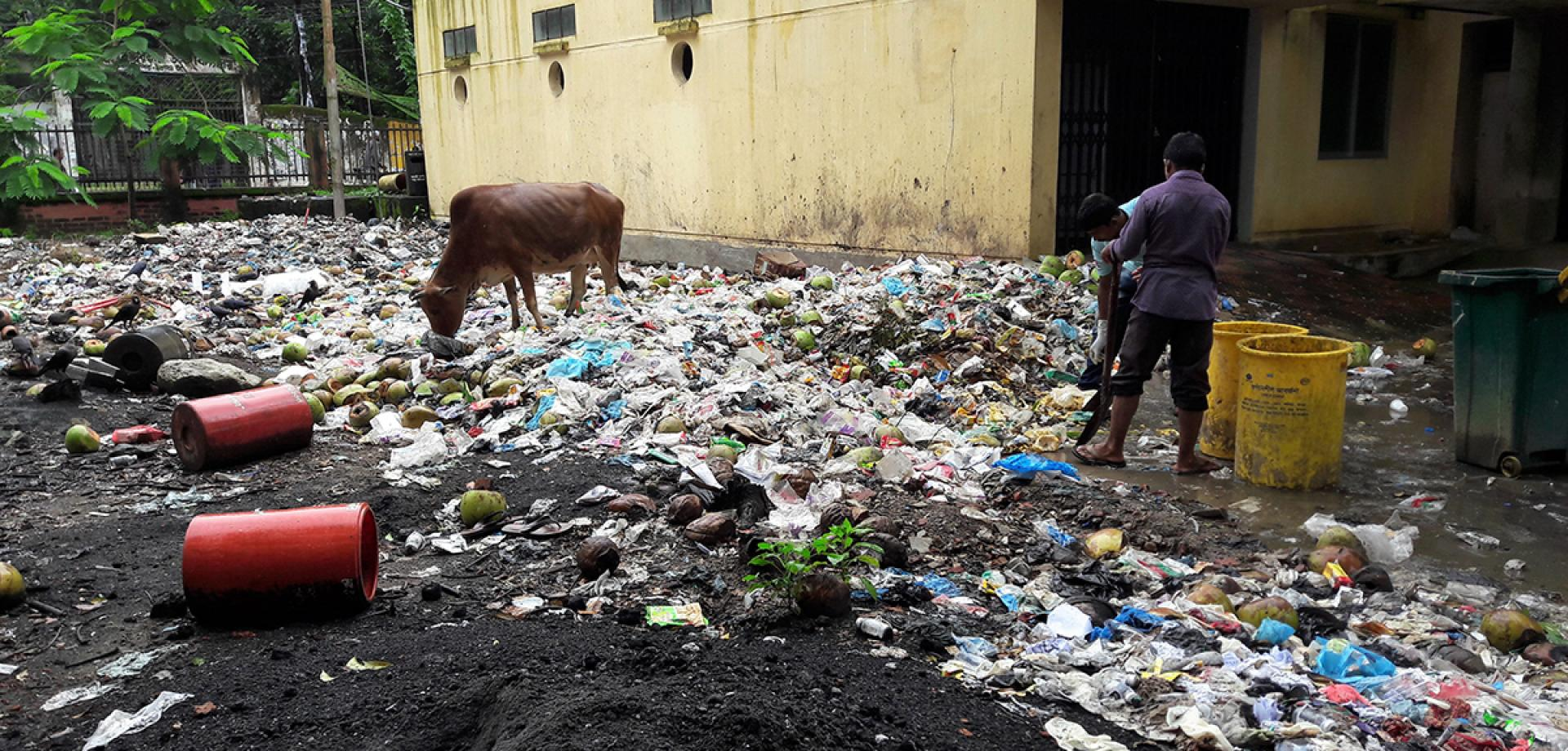 A cow grazes in the old Waste Zone at the hospital